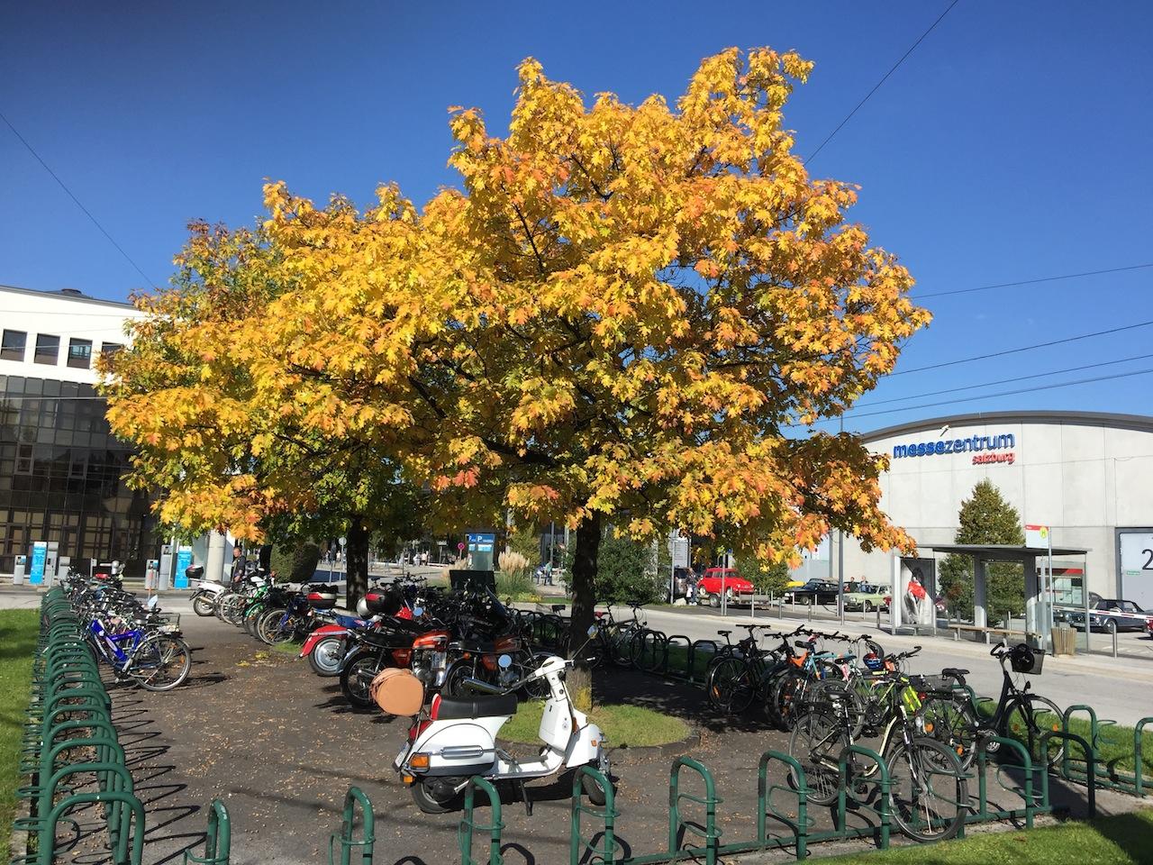 salzburg-padua-03-goldener-oktober